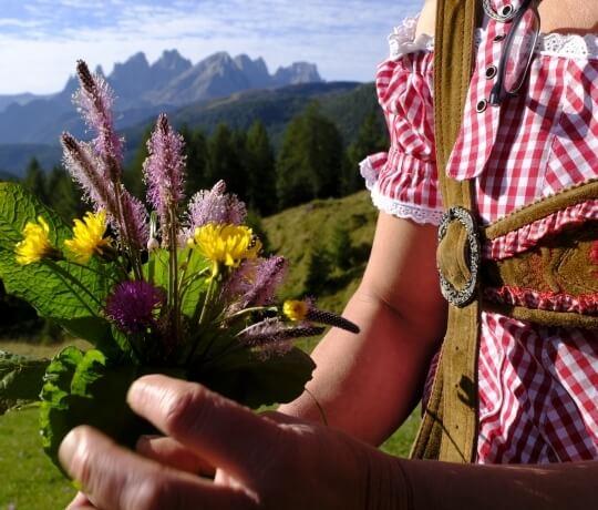 Blumen aus dem Trentino