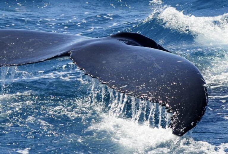 Paradiso dei Cetacei