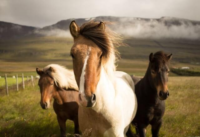 Horseback riding at the Torre del Porticciolo