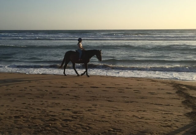 A horse ride at sunset